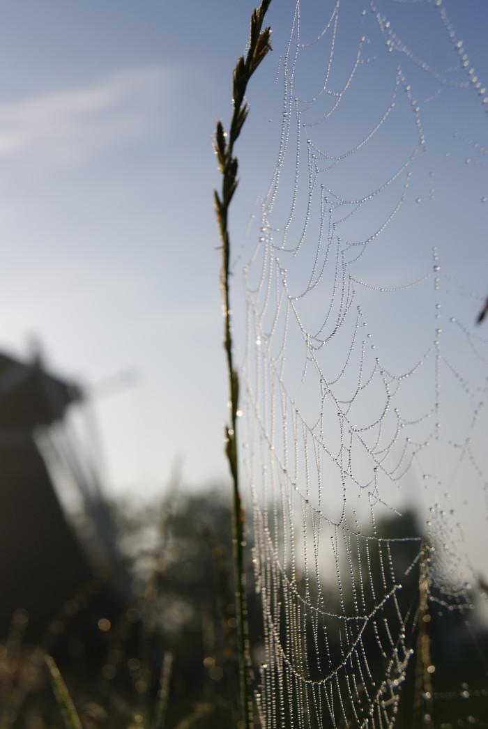 Spinnenweb in de ochtenddauw